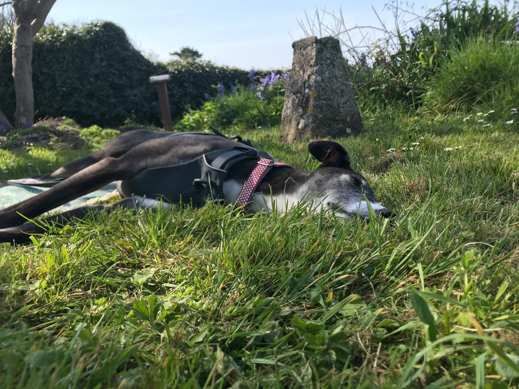 Canine Mindfulness - Hound