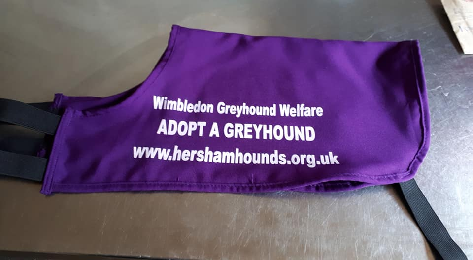 News - new adopt a greyhound coat