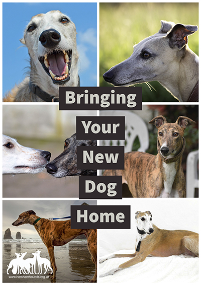Bringing Your New Dog Home