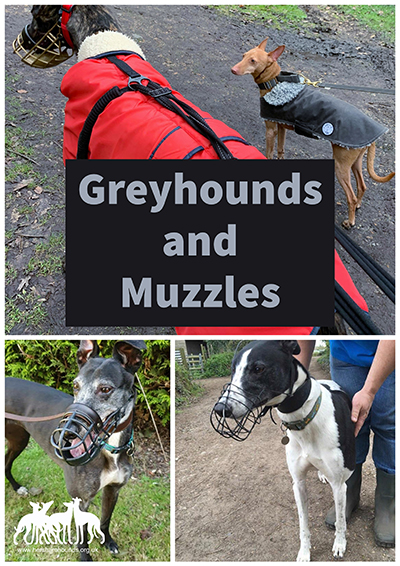 Greyhounds and Muzzles