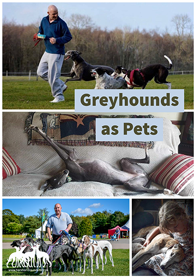 Greyhounds as Pets