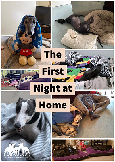 First Night at Home
